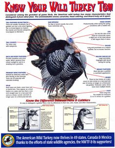 turkey parts quiz static turkey parts answers interactive nwtf turkey ...
