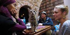 Cat Cafe New York City - Google Search