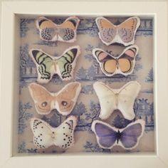 Butterflies herbarium made by Eva Hjerkinn