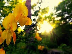 Beautifull flower in the forest during a sunset