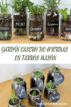 Tremendous Herb Gardening The Many Good Things About It Ideas - Gardening Herb Mason Jar Herb Garden - Wanna have a windowsill full of herbs all year round? Look no further than this DIY mason jar herb garden that . Mason Jar Herbs, Mason Jar Herb Garden, Diy Herb Garden, Garden Plants, Jar Plants, Herb Garden Design, Mason Jar Succulents, Garden Paving, Veg Garden