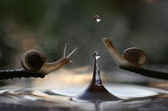 Vadim Trunov, a self-taught nature photographer based in Voronezh, Russia, takes beautiful macro photos of snails, insects and mushrooms that seem to personify them and weave beautiful little stories around these oft-overlooked creatures' lives. Photographie Macro Nature, Animal Photography, Nature Photography, Amazing Photography, Photo Macro, Macro Photographers, Fotografia Macro, Pictures Of The Week, Mundo Animal