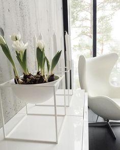G r a y d a y  { s p r i n g }  #tulips #tulppaanit #kubus #bylassen #eggchair #concretewall