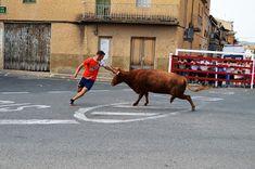Santacara: Vacas Hermanos Ganuza - Fiestas de Agosto Año 2017 Emilio, Goats, Animals, Cows, Siblings, Fiestas, Animales, Animaux, Animal