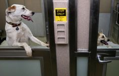 Abandoned Dogs Rescued From Sochi Arrive At Washington DC Rescue Shelter