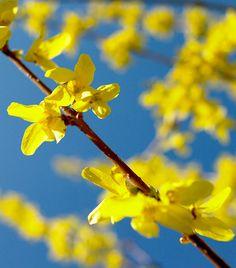 A 10 legszebb tavaszi virág - Húsvét   Femina Sun Paper, Plants, Google Search, Plant, Planets