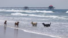 17 dog-friendly parks and beaches in Southern California