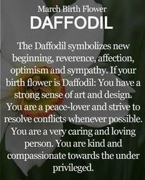 March Birth Flower : Daffodil Which is the Birth Flower for March? Know about the March Birth Flower Daffodil here. Find the meaning of March Flowers here. March Baby, Hello March, March Month, Tarot, March Birth Flowers, March Pisces, Flower Meanings, Language Of Flowers, Birthday Month