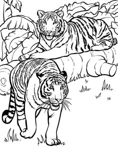 Tiger Coloring Pages and Book | UniqueColoringPages