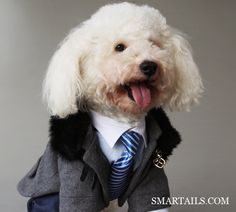 PET CLOTHING - Smartails is a luxury clothing line for animal lovers and their pets. Please support our campaign to save dogs from the meat market in China, visting our indiegogo and facebook pages.   http://igg.me/p/431772/x/3563784 www.facebook.com/smartails   There you will be able to make a donation and get beautiful products for your pets.