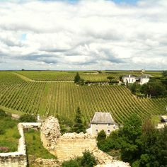 The vineyards around Chinon in the Loire Valley, France. For good wine, good food, culture, chateaux, history, this region of France is hard to beat
