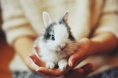 Pocket sized black and white bunny:)