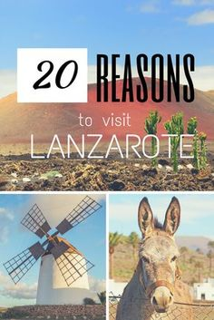 20 Reasons to Visit Lanzarote (As if you needed an excuse...)