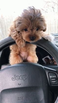 Not my pin Super Cute Puppies, Cute Baby Dogs, Cute Little Puppies, Cute Dogs And Puppies, Cute Little Animals, Cute Funny Animals, Doggies, Tiny Puppies, Babies With Dogs