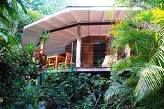 timber yurt in the rainforest.