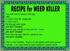 1000 ideas about killing weeds on pinterest weed killers vinegar weed killers and mulches - Fight weeds with organic solutions practical tips in the garden ...