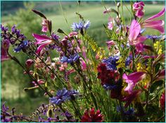 Fiori di campo - Fields' flowers