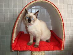 Cheetara: minha gata e musa! (my cat and muse)