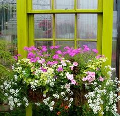 Pink and white flowers in window box.
