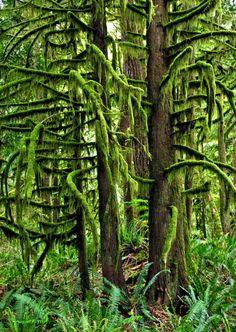 green moss trees...beautiful