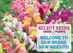 Select Seeds offers gardeners a fabulous selection of unique, high-quality flower seeds and plants. Garden Catalogs, Plant Catalogs, Seed Catalogs, Garden Seeds, Planting Seeds, Garden Plants, Monopoly Money, Spin Doctors, Why Try