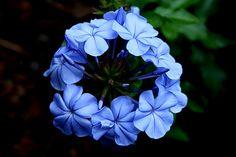Blue Photograph - Circle Of Life by Doug Norkum Art Prints For Sale, Fine Art Prints, Canvas Prints, Art Sites, Circle Of Life, Great Photos, Beautiful Images, Fine Art America, Wall Art