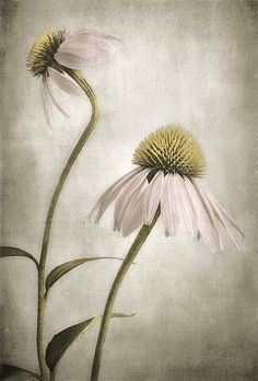 ~the friendliest flower~ <3. Repinned from Elizabeth Aviles via Linda Kittmer.