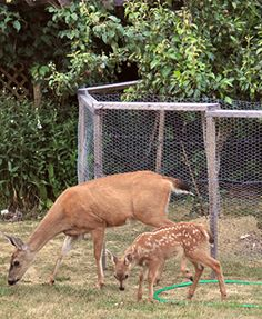 Ideas to keep deers out of the garden