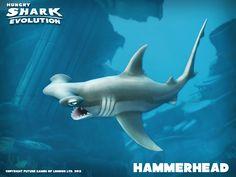Hammerhead shark - Hungry Shark Evolution