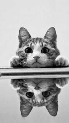cat, animals, Black and White Photography
