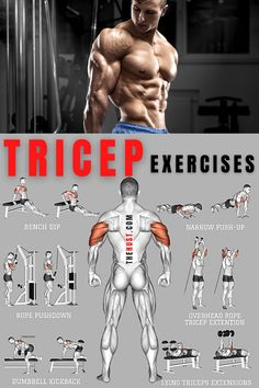 Arm Day Workout, All Body Workout, Forearm Workout, Push Workout, Full Body Workout Routine, Gym Workout Chart, Abs Workout Routines, Gym Workout Tips, Triceps Workout
