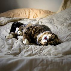 lil bub in bed <3