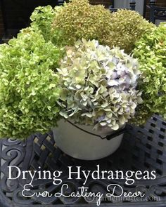 Now's the time to start checking to see if your hydrangeas are ready to be cut for drying.