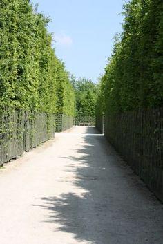 Versailles gardens..huge maze