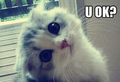 Show someone this when they look sad, they will smile! #sickcatsad
