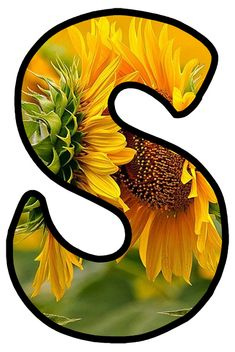 The letter s stands for Samantha beautiful sunflower You Are My Sunshine my only sunshine Sunflower Quotes, Sunflower Pictures, Butterfly Pictures, Alphabet Wallpaper, Name Wallpaper, Wallpaper Backgrounds, Alphabet Letters Design, Letter Art, Birthday Chart Classroom