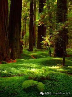 Create a favorite poet moss garden