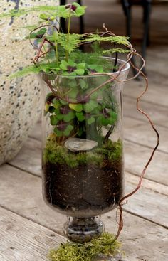 So Gorgeous   Terrain Glass Urn Terrarium. Great Way To Bring The Outside  In.