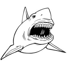 how to draw megalodon megalodon shark step 5  drawing references