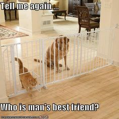 tell me again..who is man's best friend?