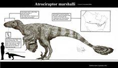 atrociraptor_marshalli_by_teratophoneus-d5ev4rt.png (1600×926)