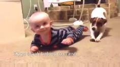 Bebeğe emeklemeyi öğreten sevimli köpek