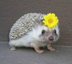 'This hedgehod with a daisy in her hair wishes you would spend a bit more time volunteering.'-- No guilt, mamas, from other people, animals ...