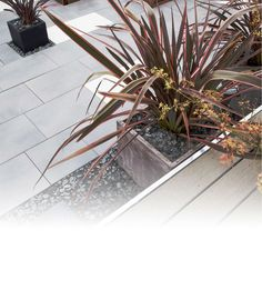Jardins on pinterest ornamental grasses contemporary landscape and landscape design for Amenagement jardin contemporain