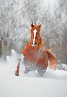 Amazing Horse Photography by Olga Itina | SnapzLife