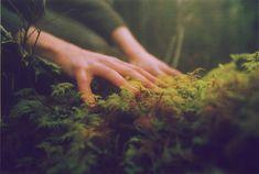 jihyoo: It is alive, and it is growing. by alison scarpulla on Flickr.