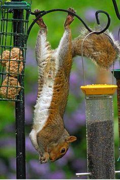 Circque de Squirreleil!