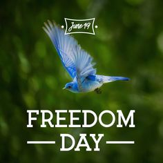 What do you have freedom from? Let's celebrate your freedoms! Freedom Day, Your Freedom, Robert Frost, I Am Blessed, Fight For Us, Lets Celebrate, Love Birds, Word Art, Avon