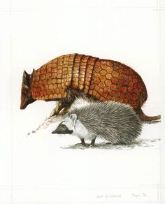 THE ARMADILLO AND THE HEDGEHOG BY ROBERT INGPEN