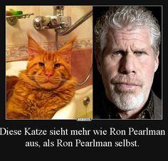 Diese Katze sieht mehr wie Ron Pearlman aus..